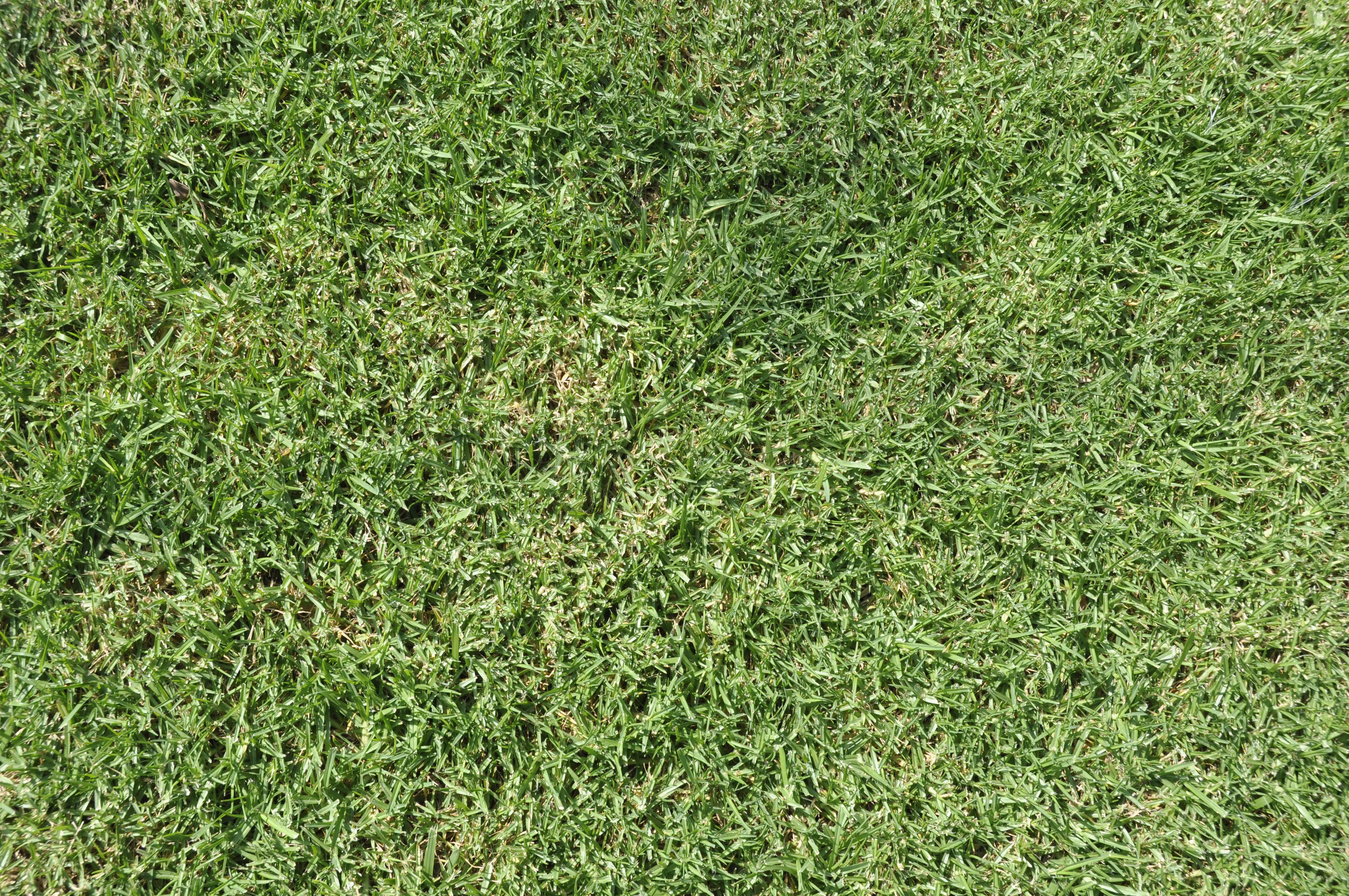 3d max как сделать траву 943