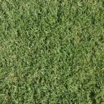 Сборник текстур газона, травы, растений