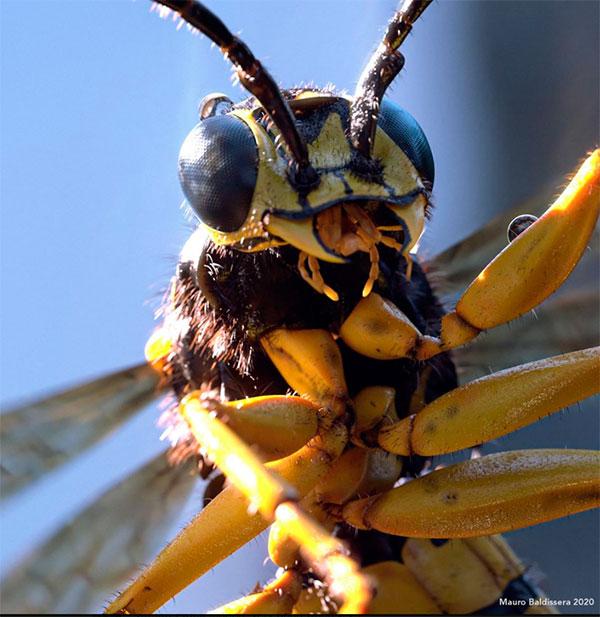 Война жуков в Vray